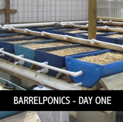 aquaponics with barrels