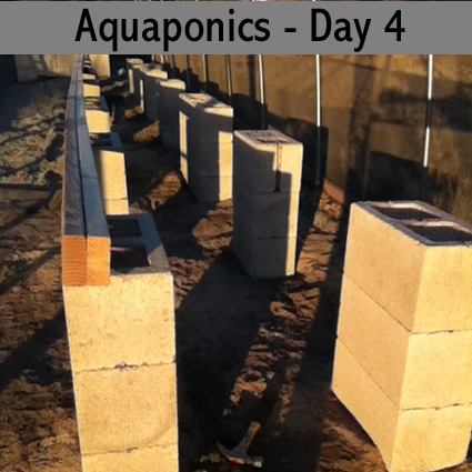 aquaponics-with-barrels-day-four