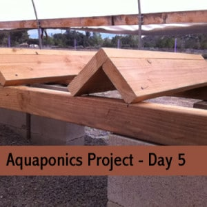 aquaponics-project-day-5