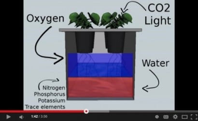 aquaponics_system_kratky_explained