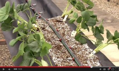 gutter_hydroponics_from_university_of_arizona