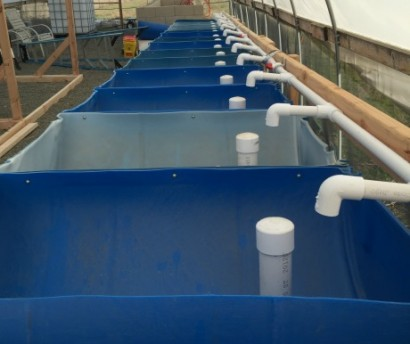 aquaponics_barrel_pipestand_with_bell-siphon