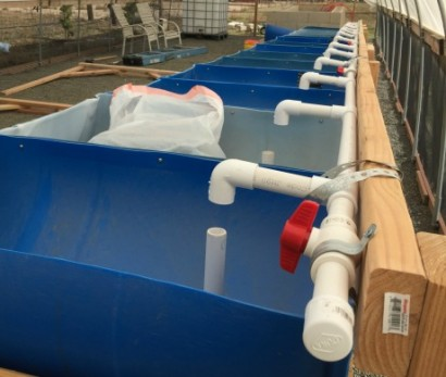 aquaponics_barrel_water_input_for_barrels