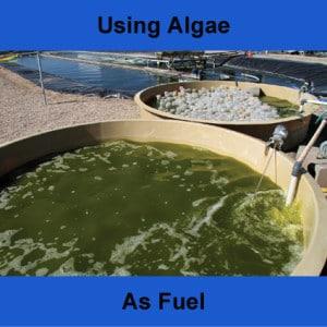 using-algae-as-fuel