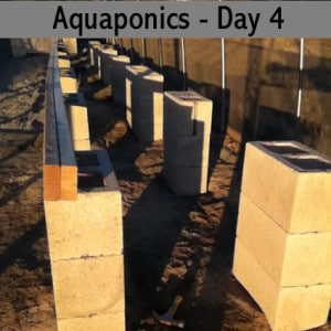 aquaponics-with-barrels-day-four